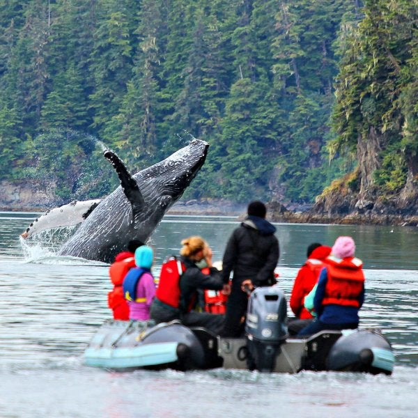 Explore the remote wilderness of Alaska this summer on a yacht